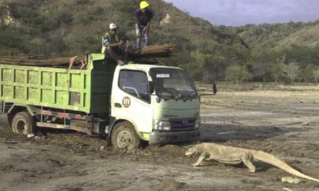 Foto viral de dragão-de-komodo revela construção de atração tipo 'Jurassic Park' em ilha
