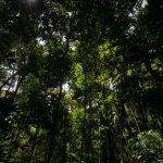 Apenas 3 de quase mil autuações aplicadas pelo Ibama por desmate na Amazônia em 2020 foram quitadas