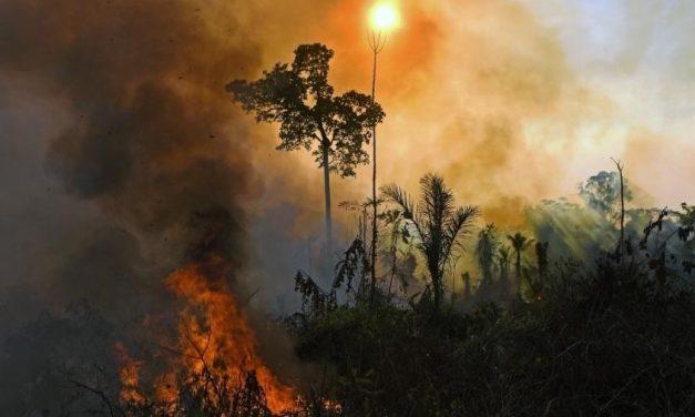 """ONGs afirmam que é """"repugnante"""" plano do governo Bolsonaro para o setor"""