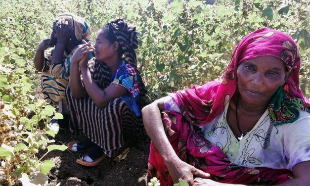 Anistia Internacional denuncia massacre em conflito na Etiópia