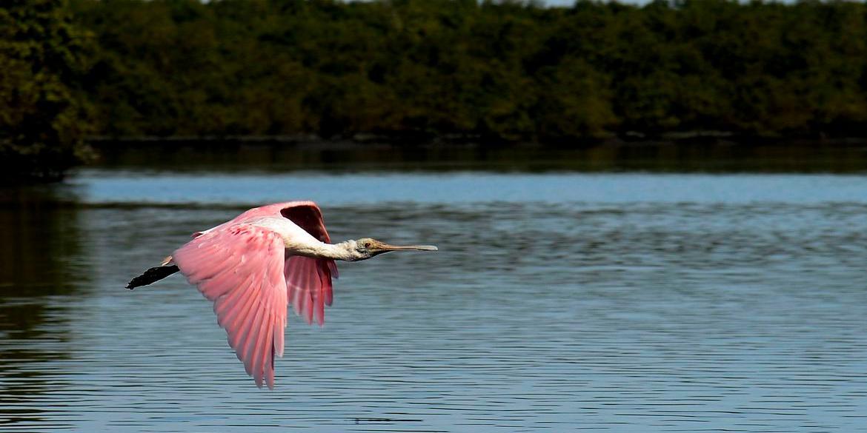Ministério do Meio Ambiente exclui de site informações sobre áreas protegidas