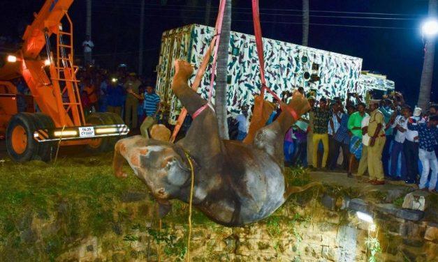 Operação de 16 horas ergue elefante que caiu em poço de 20 metros