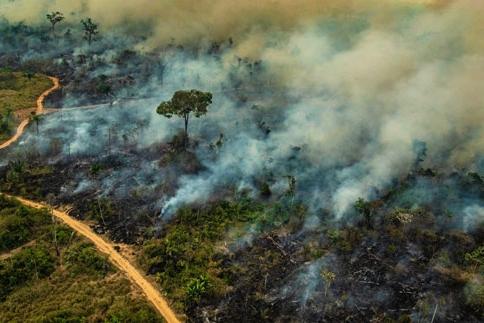 Pará concentra maior volume de ações que correm na Justiça em busca da proteção ambiental da Amazônia