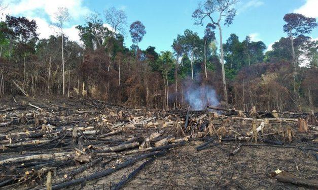 'Amazônia Viva 6' flagra garimpos ilegais e coloca em proteção área equivalente a 7 mil campos de futebol