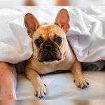 Dormir com o cachorro na cama faz mal? Depende de cada caso