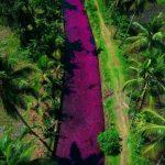 Rio na Índia fica rosa em consequência de fenômeno e vira atração turística