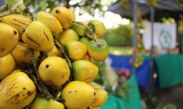 Produtores assistidos pela Emater comercializam na 20ª Feira da Agricultura