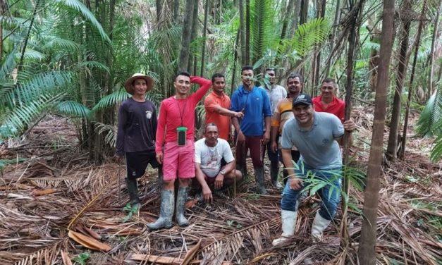 Emater habilita extrativistas do Marajó para aumentar produtividade de açaizais nativos