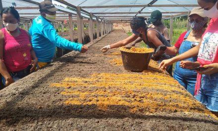 Emater ministra oficina sobre hortas suspensas para agricultores de Afuá, no Marajó