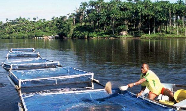 Pará tem espaço favorável para a criação de pescado e ganha destaque