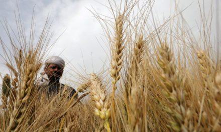 Rússia admite limitar exportações de alimentos, mas não vê déficit de grãos