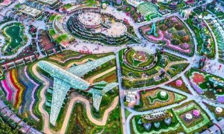 Miracle Garden: o jardim com 150 milhões de flores em Dubai