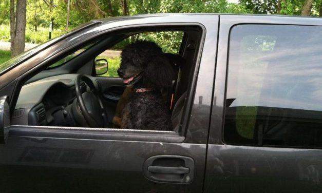 Mulher diz que polícia a parou 5 vezes por confundir cão com pessoa negra