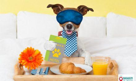 Cinco hotéis bons pra cachorro!