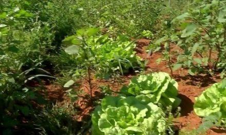 Queda do consumo de hortaliças na pandemia prejudica agricultores do MT