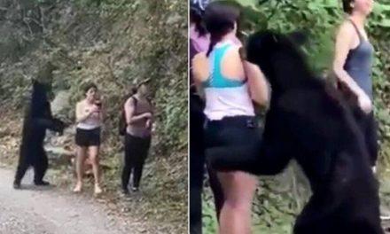 """Urso que cheirou mulher tem testículos removidos: """"humanos idiotas"""""""