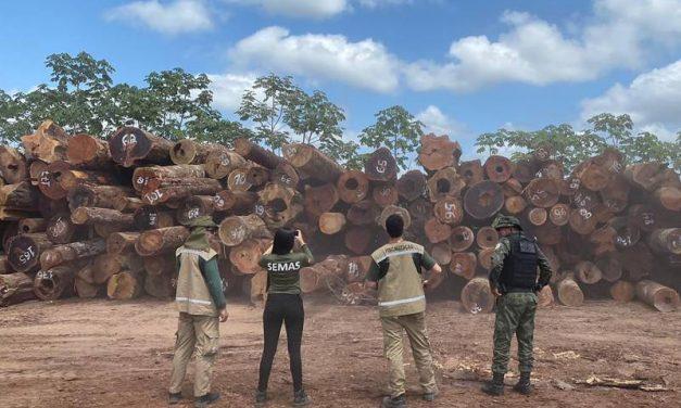 Semas flagra crimes ambientais em Portel e Bagre, no Marajó