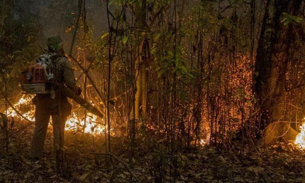 Com resposta lenta do governo, voluntários vão à luta pelo Pantanal