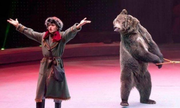 Tratador morre após se trancar em jaula com urso de circo na Rússia