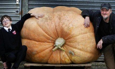 Pai e filho cultivam abóbora 'monstro' com mais de 680 quilos na Inglaterra