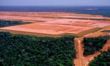 Nenhuma nova multa ambiental é cobrada no Brasil em um ano