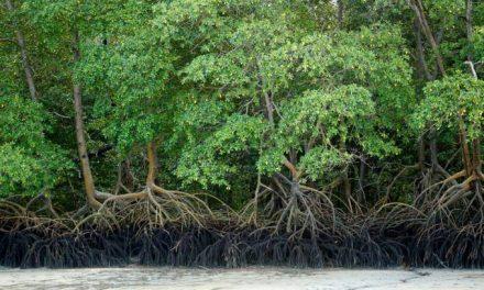 STF começa a julgar ações que questionam decisão do Conama de revogar proteção a manguezais e restingas
