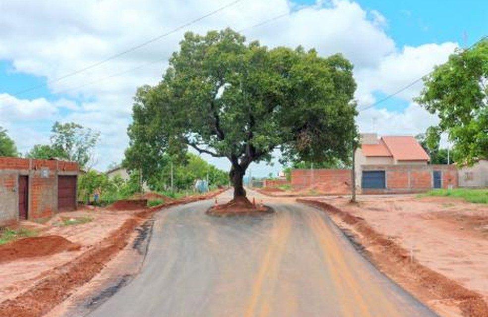 Prefeitura faz asfalto em bairro de Araguaína e preserva pé de pequi no meio de rua