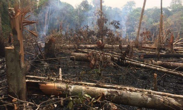 Alertas de desmatamento na Amazônia diminuem em novembro, apontam dados do Inpe
