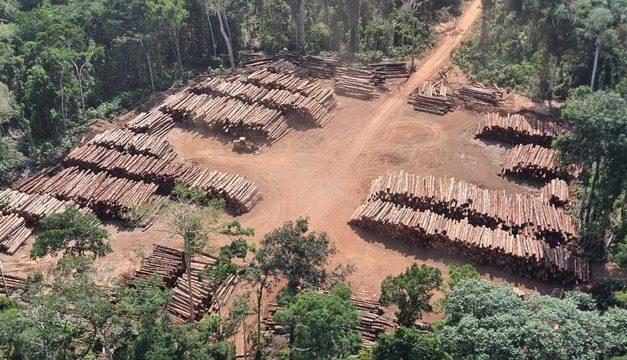 PF encontra mais de 43 mil toras de madeira irregular no Pará e realiza maior apreensão do Brasil