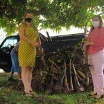 Emater doa 500 mudas de banana para associação de Portel, no Marajó