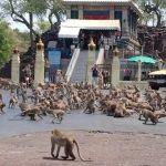 Destinos turísticos tomados por  macacos assustam brasileiros