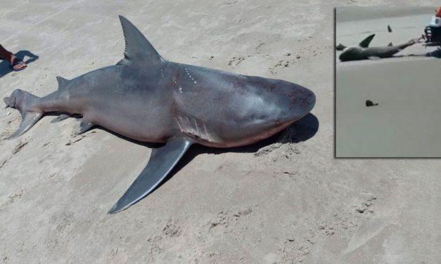 Tubarão é retirado da água, torturado e morto por banhistas no Ceará