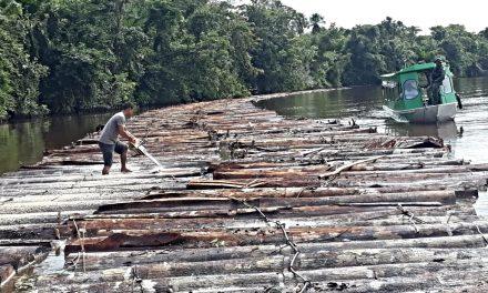 BPA apreende quase 300 metros cúbicos de madeira ilegal em Breves