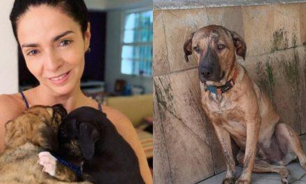 Cães adotados e devolvidos por Claudia Ohana estão deprimidos e continuam sem um lar