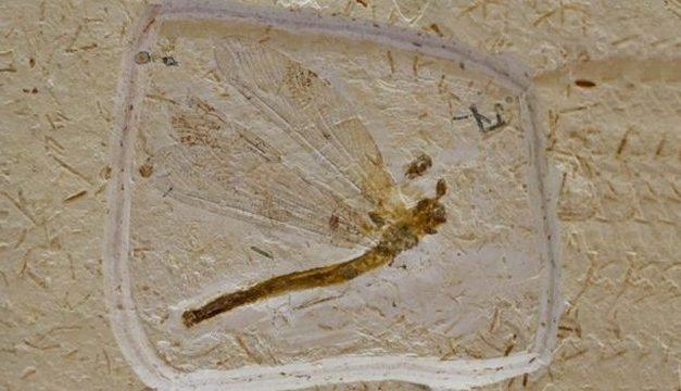 Fósseis do Ceará são contrabandeados para o exterior em esquema milionário