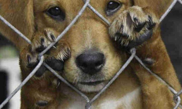 Pará realiza ações de combate aos maus-tratos contra animais