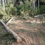 Desmatamento em março na Amazônia é o maior em 10 anos, diz Imazon
