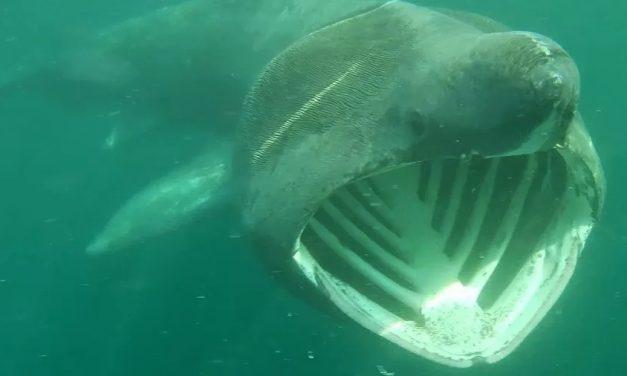Atleta encontra cinco tubarões em passeio de caiaque no Reino Unido