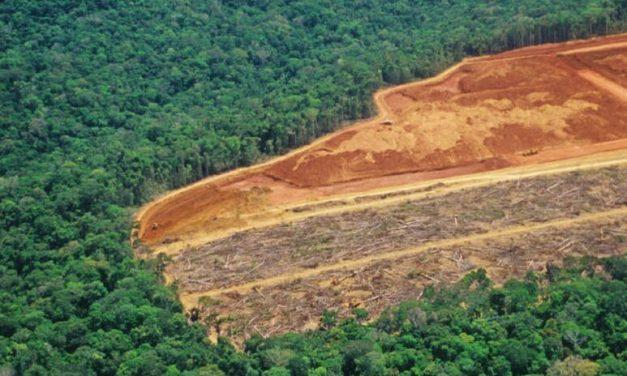 Desmatamento na Amazônia Legal chegou a 810 km² em março de 2021
