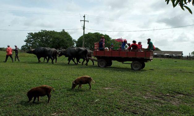 Com apoio da Emater, merenda escolar de Soure pode ampliar aquisição da agricultura familiar