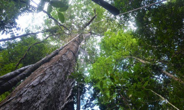 Aumento nas emissões de carbono pode reduzir em 12% volume de chuvas nos 9 países da Amazônia, diz estudo