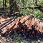 Embrapa flagra extração ilegal de madeira em área de pesquisa do Moju