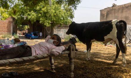 Casos de Covid na Índia diminuem, mas OMS alerta para número alto de exames positivos