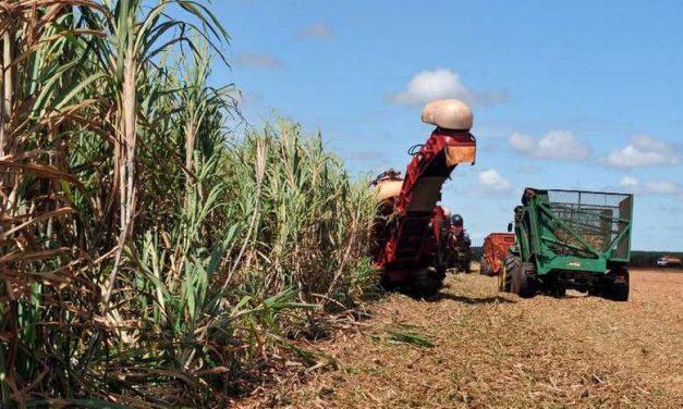 Estudo do Dieese aponta crescimento do setor agropecuário no Pará