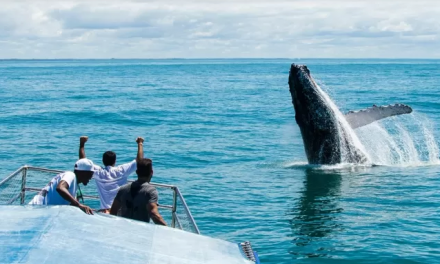 """""""De férias"""" no Brasil, baleias-jubarte animam retomada do turismo no país"""