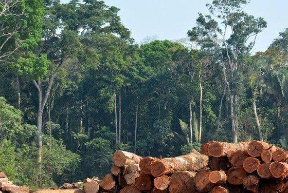 Mecanismos adequados podem reduzir impactos ambientais e sociais na Amazônia