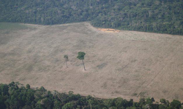 Desmate em área de conservação avança 312% no Brasil