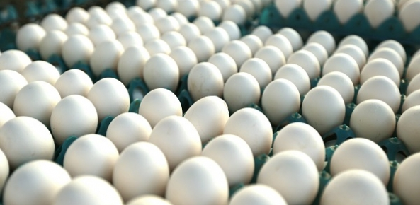 Ovo de galinha está cerca de 30% mais caro em Belém, aponta Dieese