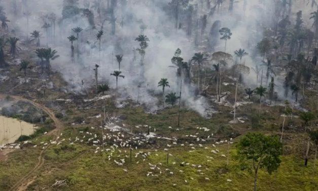 Ricardo Salles: saída tardia de ministro não mudará política pró-desmatamento de Bolsonaro, dizem ONGs