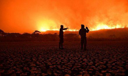 Área queimada no Pantanal em 2020 foi 5 vezes maior que a média anual